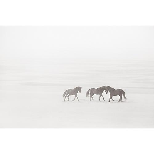 Drew Doggett, Meeting in the Mist