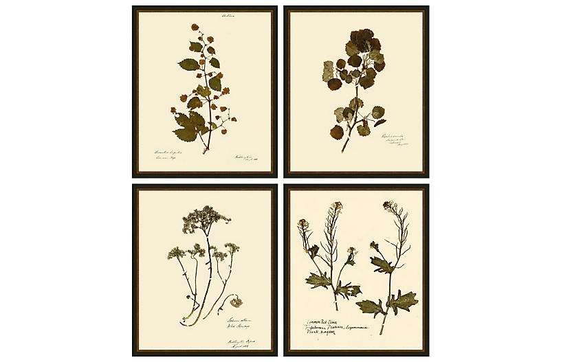 Lauren Liess, Pressed Floral Set