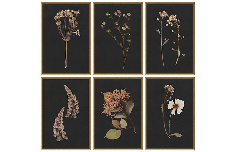 Lauren Liess, Moody Botanical Set