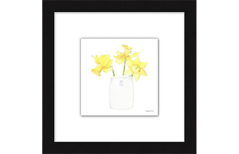 Sara Fitz, Daffodil