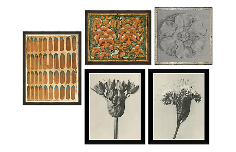 The Naturalist, Gallery Set of 5