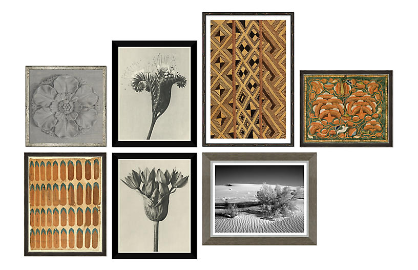The Naturalist, Gallery Set of 7