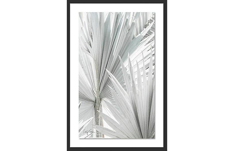 Carly Tabak, Mint Palms