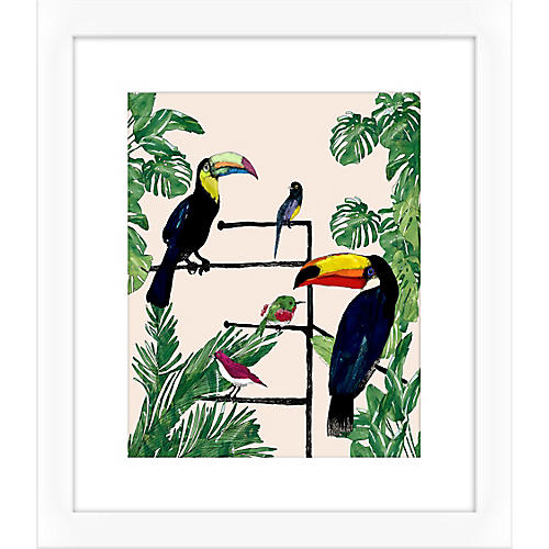 Jaybird Illustration, Toucan