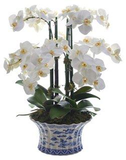Florals & Greenery Header Image