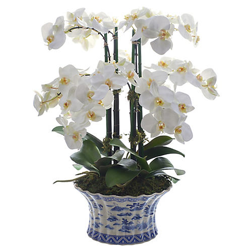 "22"" Phalaenopsis Orchid w/ Vessel, Faux"