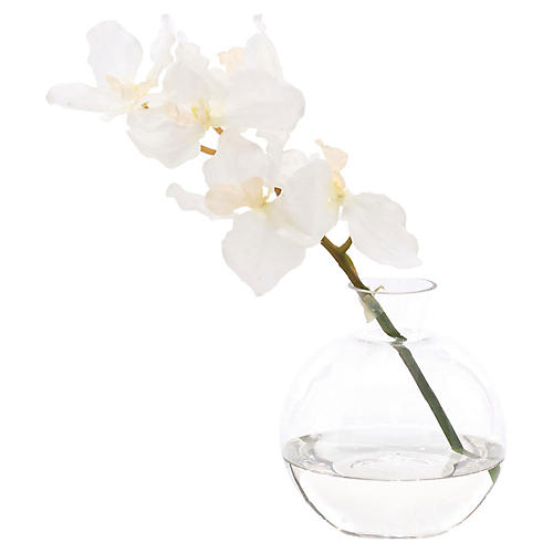 "9"" Vanda Orchid in Decanter, Faux"