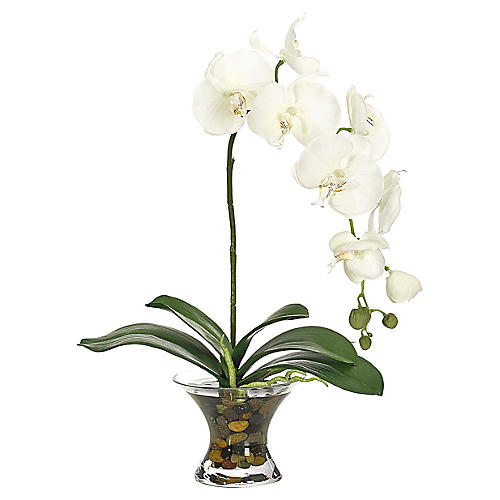 """15"""" Phalaenopsis Orchid in Flared Bowl, Faux"""