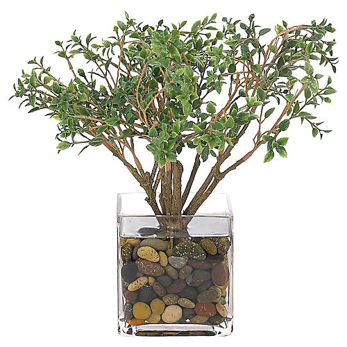 "13"" Cotoneaster in Cube Vase, Faux"