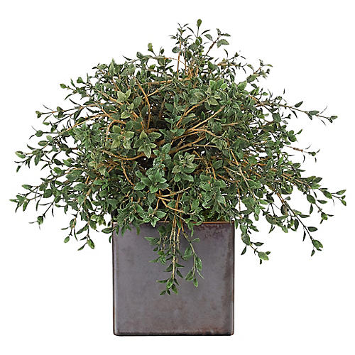 """14"""" Cotoneaster in Cube Vase, Faux"""