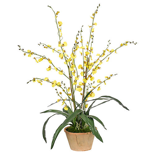 "33"" Oncidium Orchid in Terracotta Pot, Faux"