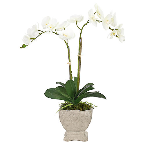 "22"" Phalaenopsis Orchid in Pot, Faux"