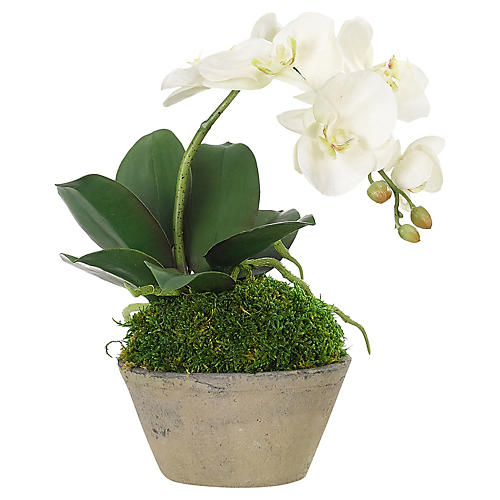 """10"""" Phalaenopsis Orchid in Terracotta Pot, Faux"""