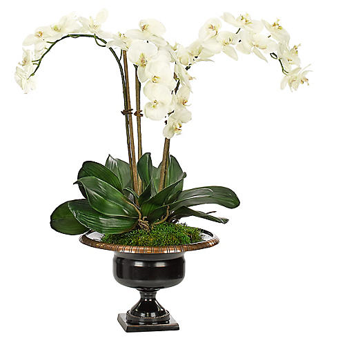 """24"""" Phalaenopsis Orchid in Bronze Urn, Faux"""