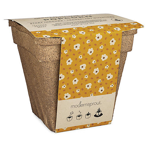 "5"" Drop-In Seed Kit, Popcorn"