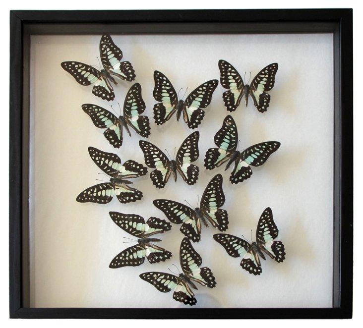 Butterfly in Frame II