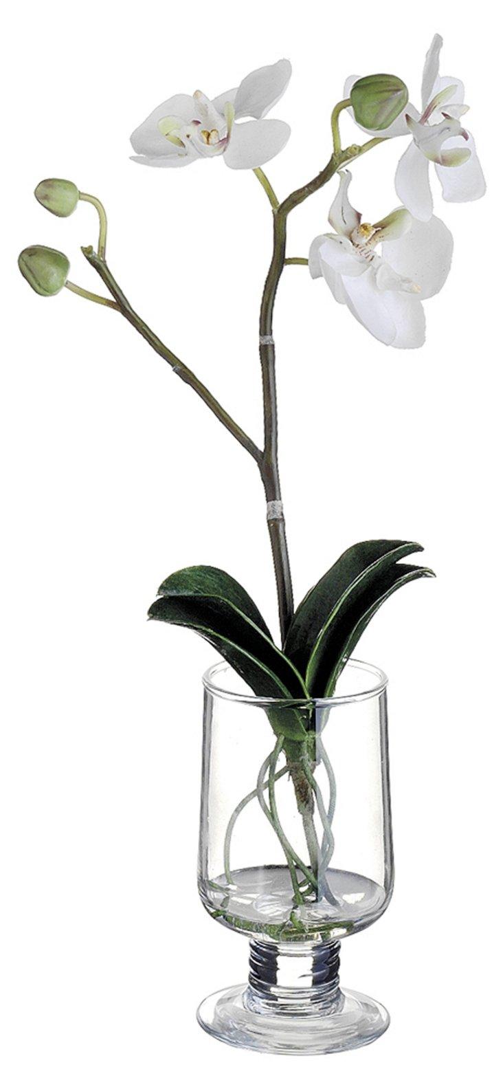 """10"""" Phalaenopsis in Vase, Faux"""
