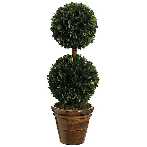 "18.5"" Boxwood Topiary, Preserved"