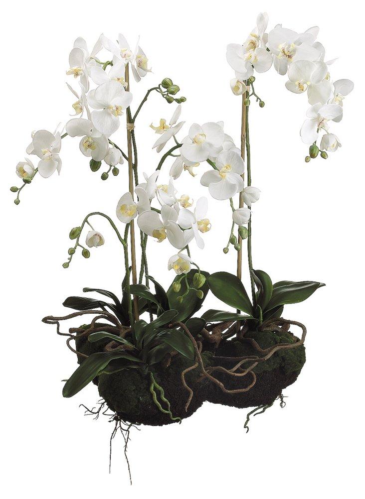 """33"""" Phalaenopsis w/Soil & Moss, Faux"""