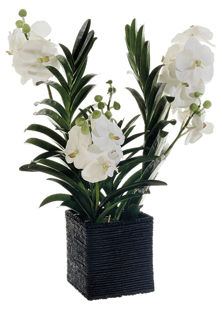 "32"" Vanda Orchid in Planter, Faux"