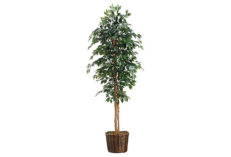 7' Ficus Tree in Basket, Faux
