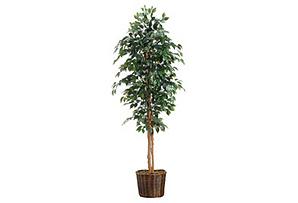 7' Ficus Tree in Basket, Faux*