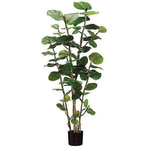 "60"" Sea Grape Plant, Faux"