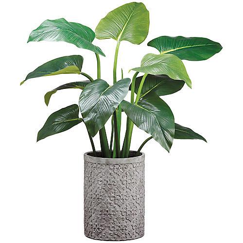 """48"""" Curcuma Plant, Faux"""