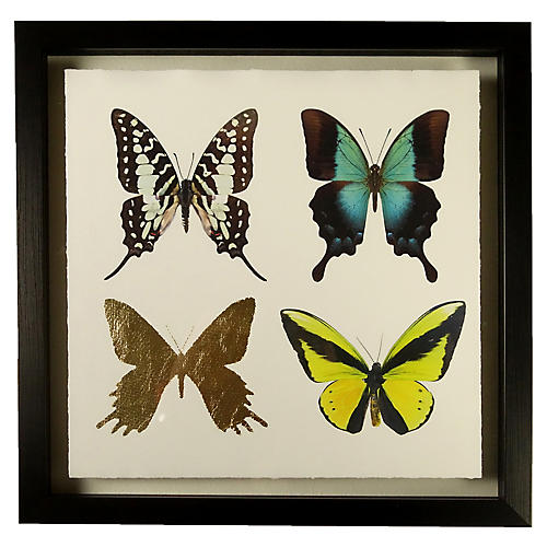 Jean Pierre, Butterflies 'B'