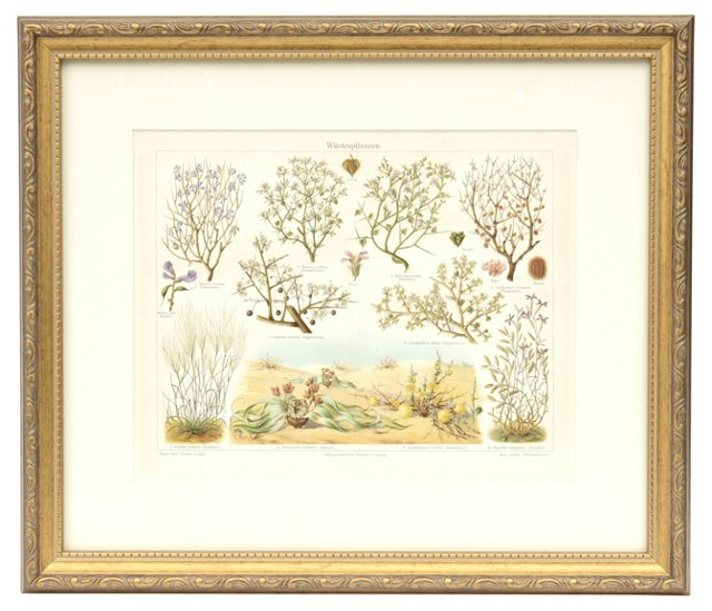Desert Plants Print
