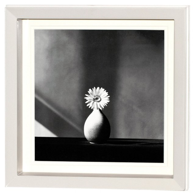 Robert Mapplethorpe, Flower 1 DNU