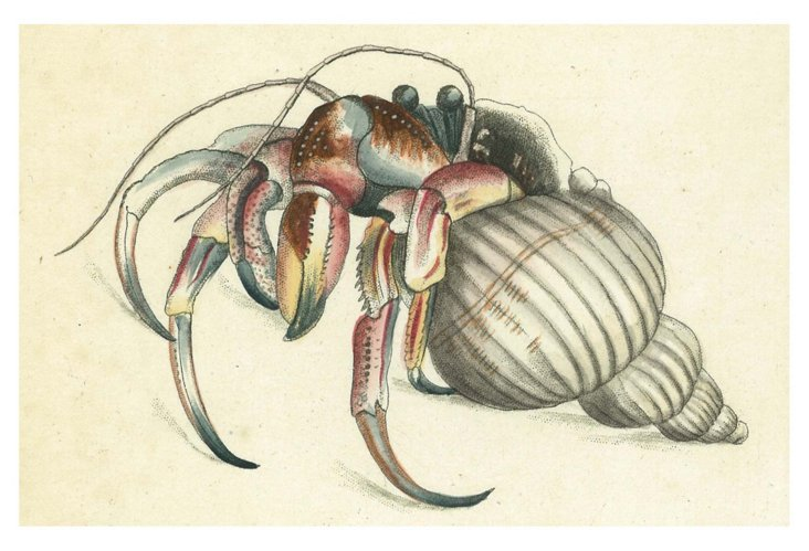 S/6 Hermit Crab Place Mats