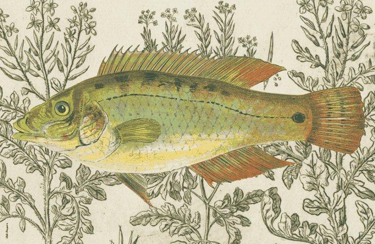 S/6 Fish Place Mats