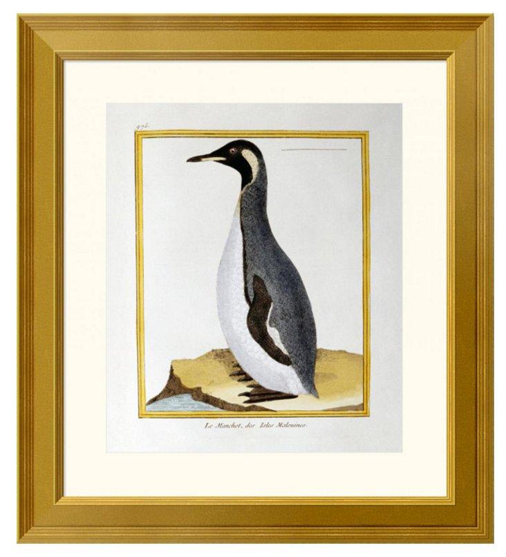 A Penguin, Falkland Islands
