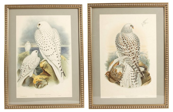 Colored Lithographs of Falcons, Pair