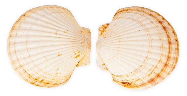 Seashells I, Set of 2
