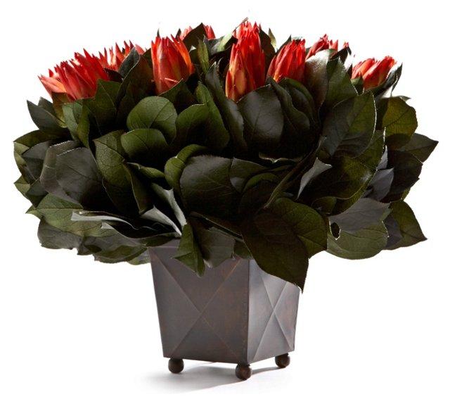 """13"""" Protea in Box, Preserved"""