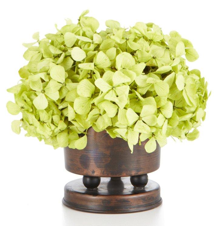 """5"""" Hydrangea Basil in Vase, Preserved"""