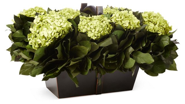"24"" Hydrangea Basil, Preserved"