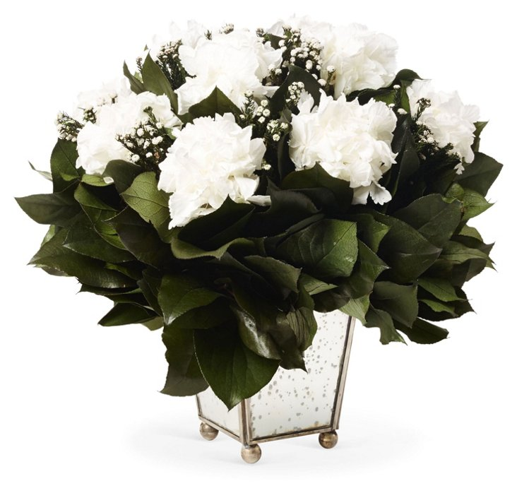 Phylica & Hydrangea in Container, White