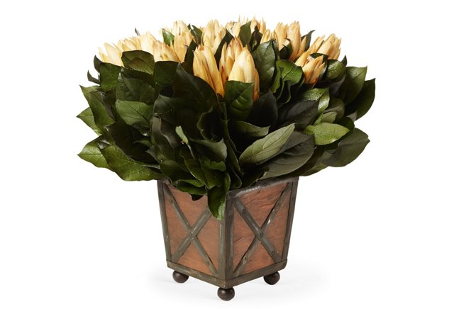 """13"""" Protea in Container, Preserved"""