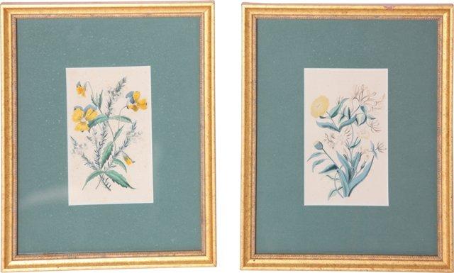 Vintage Flower Prints, Pair