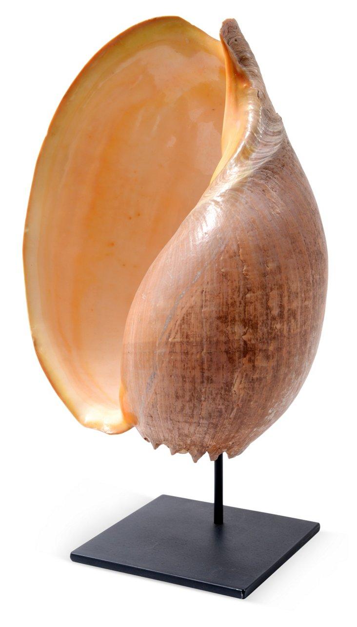 Large Seashell on Iron Stand I