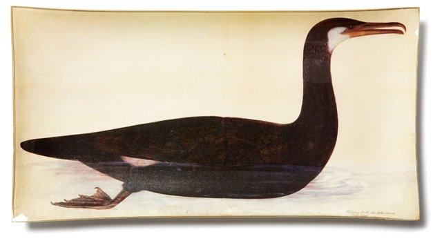 "16"" Glass Plate w/ Bird"