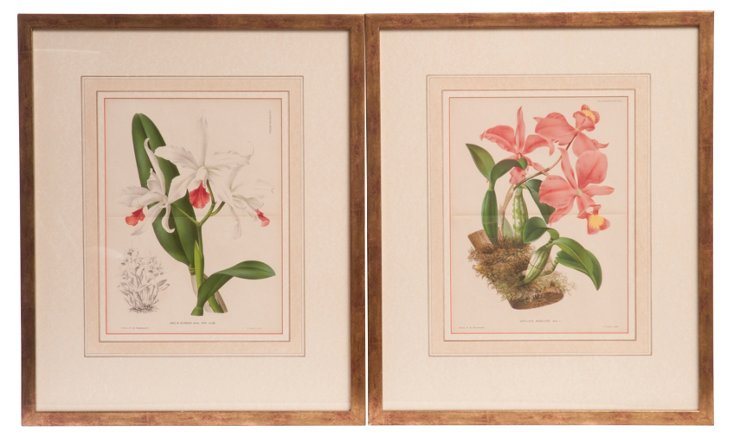 Antique Engravings of Orchids, Set of 2
