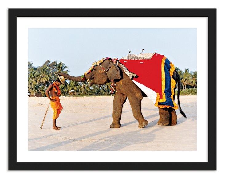 Elephant in South Goa