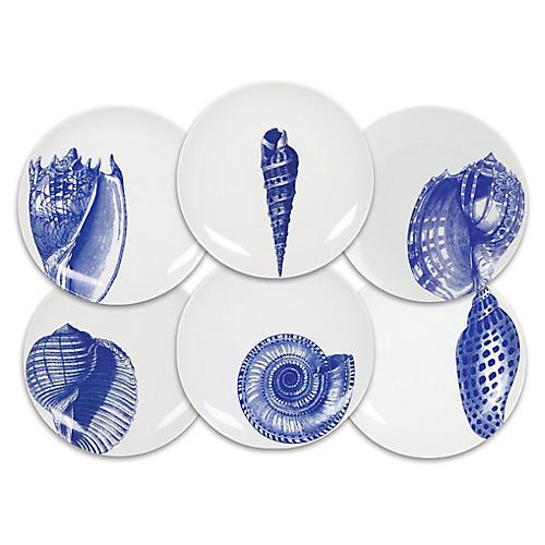 S/6 Shells Dessert Plates, White/Blue