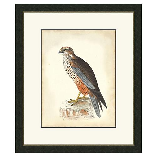 Hawks II