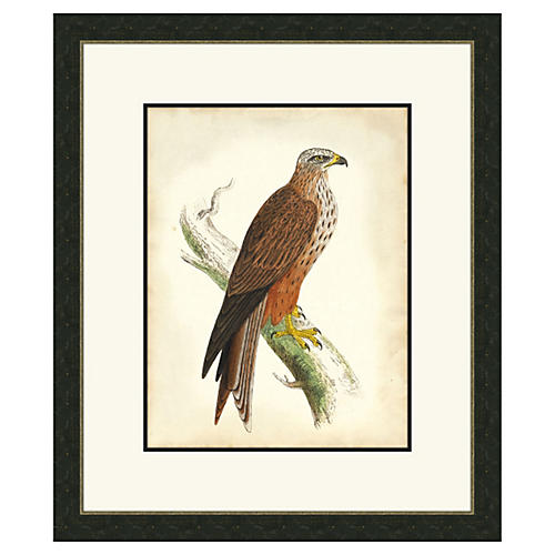 Hawks III