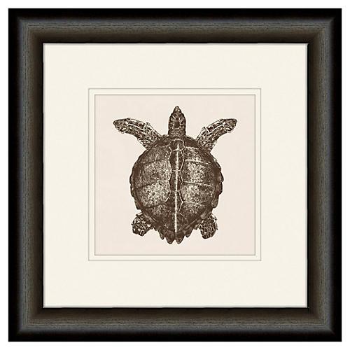 Melissa Van Hise, Turtle